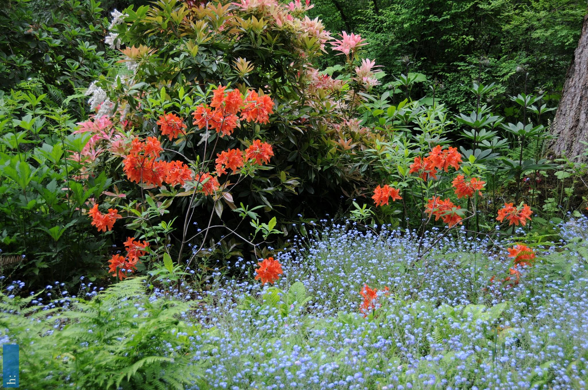 BC, Vancouver Island, Milner Gardens & Woodlands